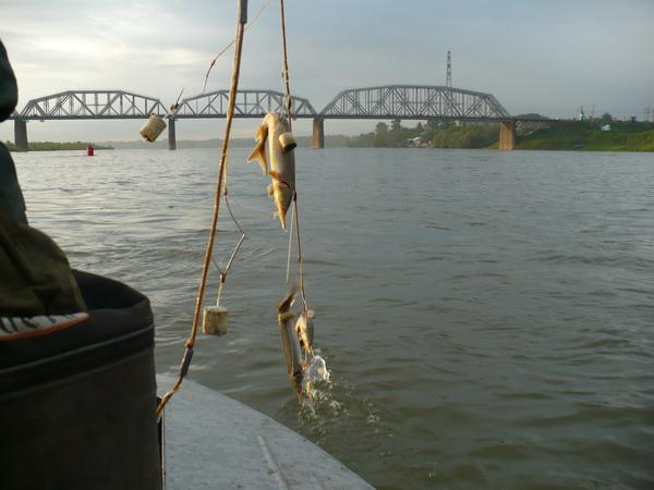 ловля рыбы получай самоловы видео