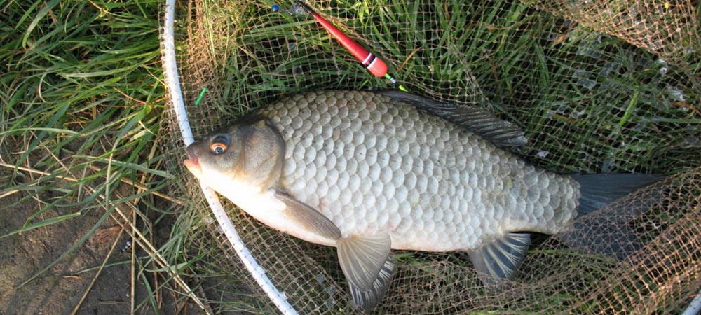 ловля рыбы на поплавочную удочку в мае