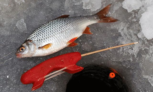Зимняя рыбалка ловля плотвы на поплавок