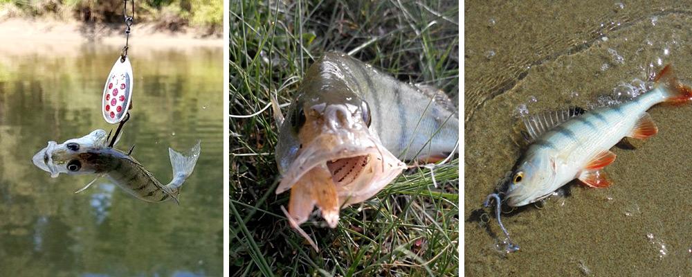 Прогноз клёва рыбы на 2018 год: по НСО и не только. Сайт ...