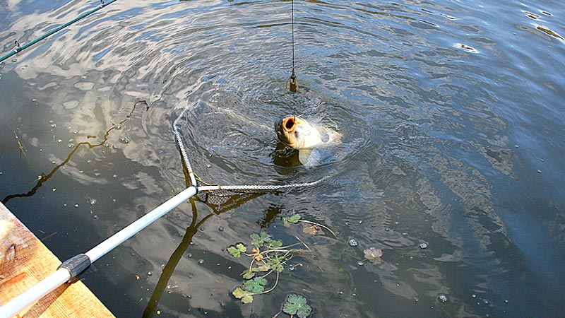 Жесткая рыбалка в фотках 9