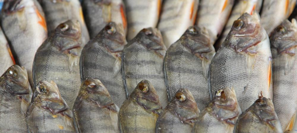 Сухая рыба рецепт #10