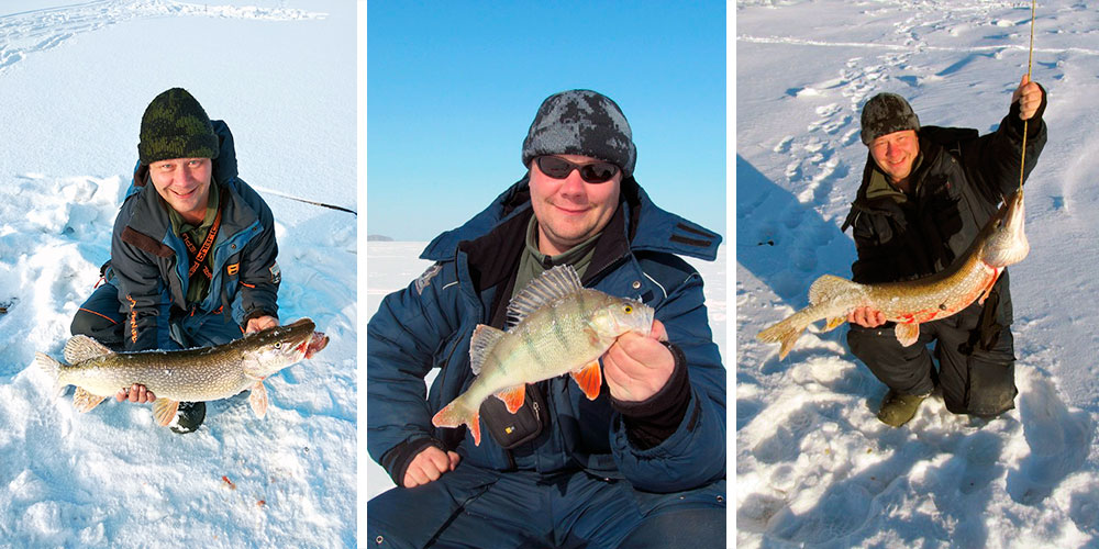 Щуки на зимней рыбалке