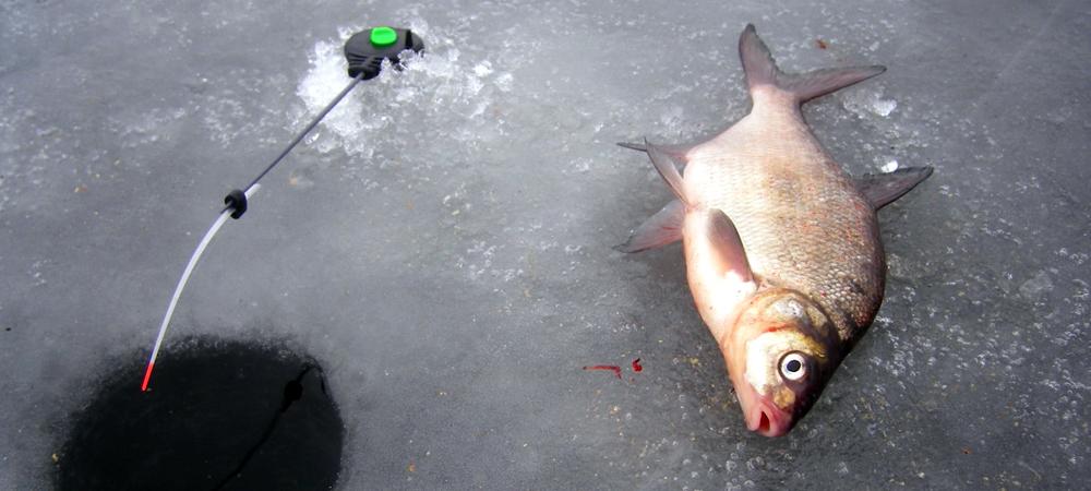 Зимняя рыбалка на подлещика