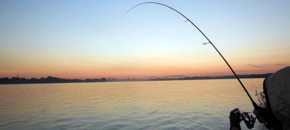 живец для рыбалки купить в омске