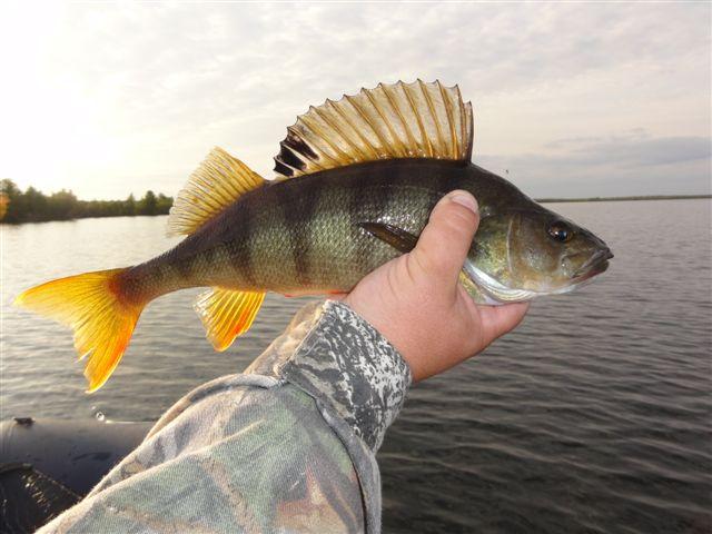 клев рыбы в томской области
