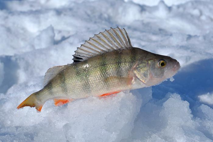 мильтюш рыбалка