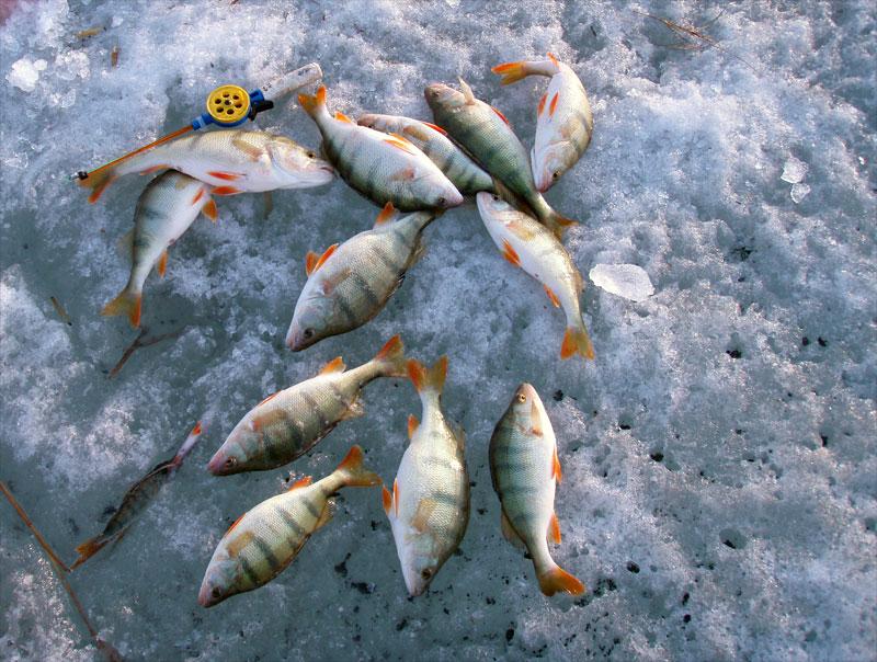 клюет рыба при большом давлении