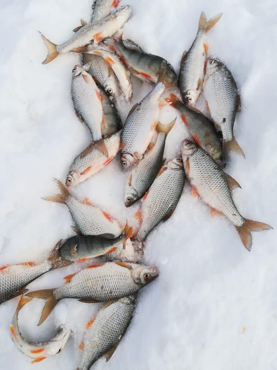 База рыбака «КОРДОН». Сузун. с.Каргаполово