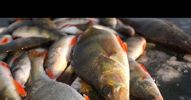 рыбалка в казахстане на окуня
