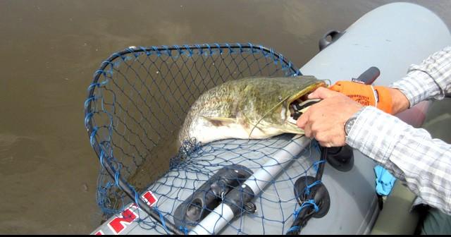 Как сделать сачок для ловли своими руками. Как сделать сачок для рыбалки, для бабочек, для рыбы. Как сделать детский сачок в домашних условиях