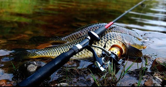 Фидерная снасть - что это такое и как она используется для ловли (135 фото видео)