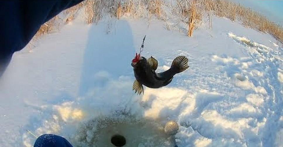 зимняя рыбалка на льду окунь