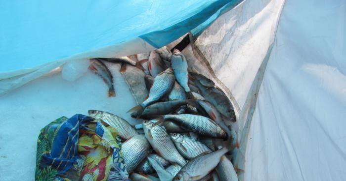 рыбак шарыпово